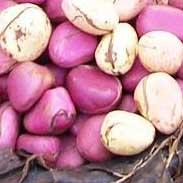 Richard Whelan ~ Medical Herbalist ~ Kola Nut