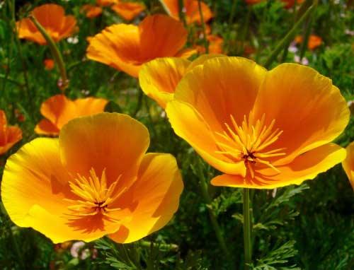 Richard Whelan ~ Medical Herbalist ~ Passion Flower