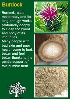 Richard Whelan ~ Medical Herbalist ~ Dandelion