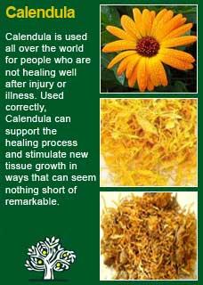 Richard Whelan ~ Medical Herbalist ~ Yarrow