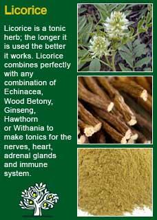 Richard Whelan ~ Medical Herbalist ~ Mullein