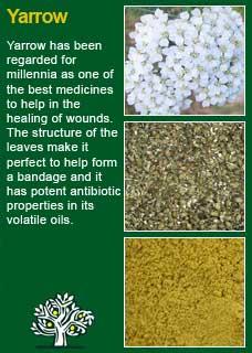 Richard Whelan ~ Medical Herbalist ~ Raspberry Leaf